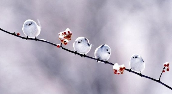 4羽のシマエナガ