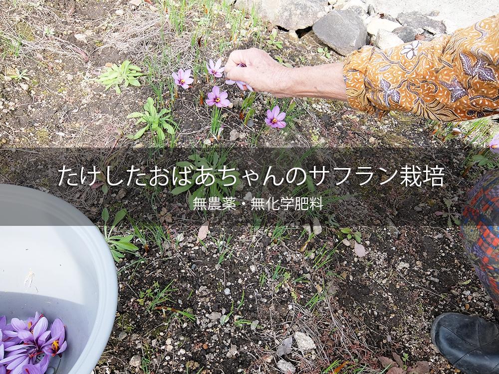 Saffron2016_1