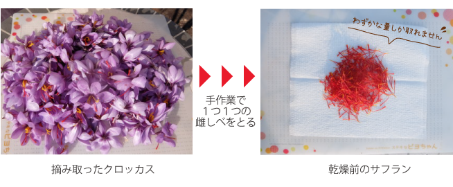 Saffron2016_7