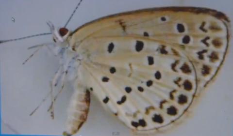 健康的な食物を食べた正常な蝶