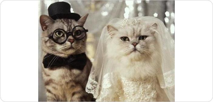 モテない40代女子が結婚する10の方法「結婚相手の条件を下げたら一気に...