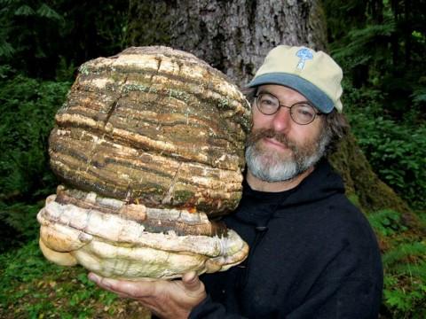 paul-stamets-mushrooms