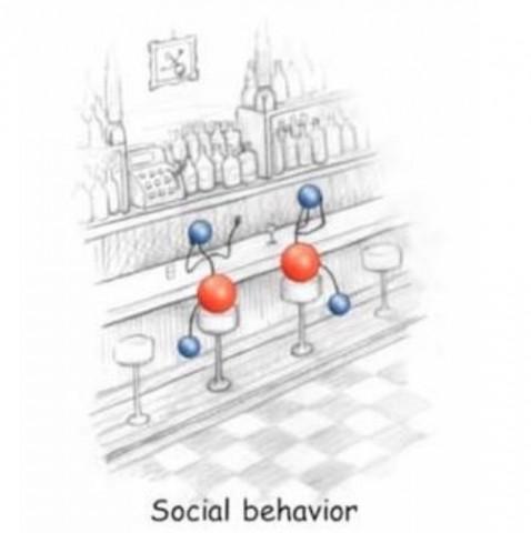 《社会的行動》