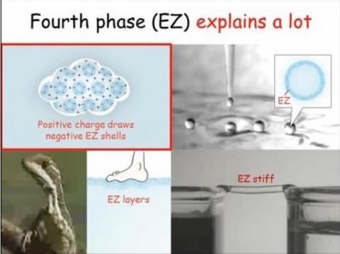 《四番目の状態(EZ)が説明可能にすること:正電荷が負電荷のEZ殻を引き寄せる、EZ、EZ層、EZ硬直》