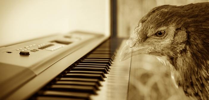 ピアノを演奏するニワトリさん 実の姉と一緒!?
