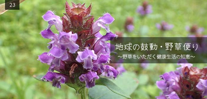 [第23回] 地球の鼓動・野草便り 昔からの生活の中の植物と薬効の高い...